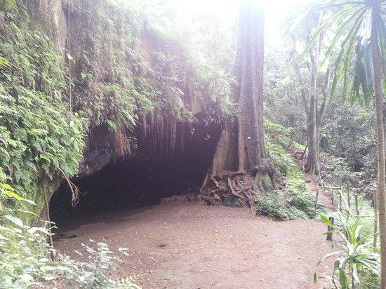 karura-forest-reserve